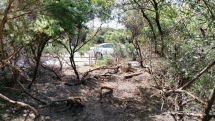 Garden maintenance - Scrub clearing progress