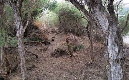 Scrub clearance and removal